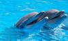 Из-за карантина дельфинарий в Петербурге оказался под угрозой закрытия