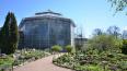 Ботанический сад Петра Великого ищет волонтеров