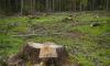 Под Выборгом лесоруб погиб из-за нарушений правил безопасности при вырубке леса