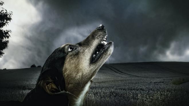 В Петербурге в квартире содержалиcm 63 агрессивные собаки
