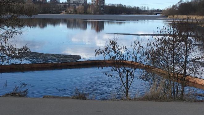 В Выборге бухту Радуга начали очищать от загрязнений