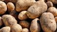 Египетский картофель с гнильцой не попадет на прилавки ...