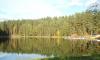 Павловский парк установил рекорд: за выходные его посетили 56 тысяч человек