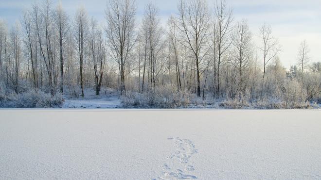 В Петербурге вывезли тысячу кубометров снега