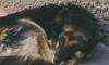 В Выборге воздвигнут бронзовый памятник бездомному псу Мишке