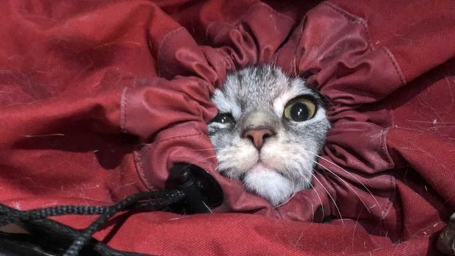 Спасатели вернули петербуржцам павлина-беглеца и трех котов