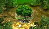 Охранять экологию в Ленобласти помогают дафнии