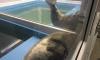 Жителям Петербурга показали как спят тюлени и нерпы