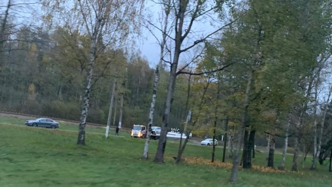 Легковушка сбила кабана в Приморском районе Петербурга