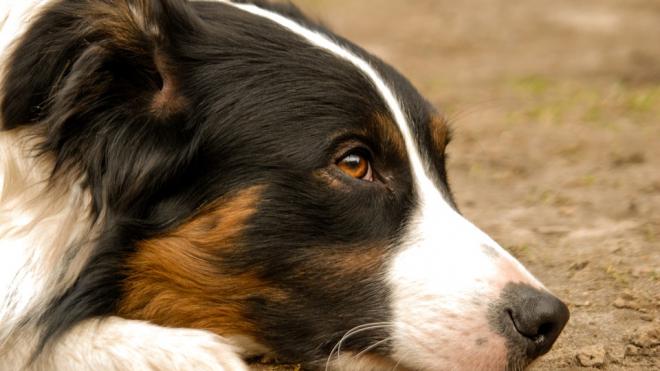 В Петербурге пьяный живодер зарезал свою собаку на глазах у людей