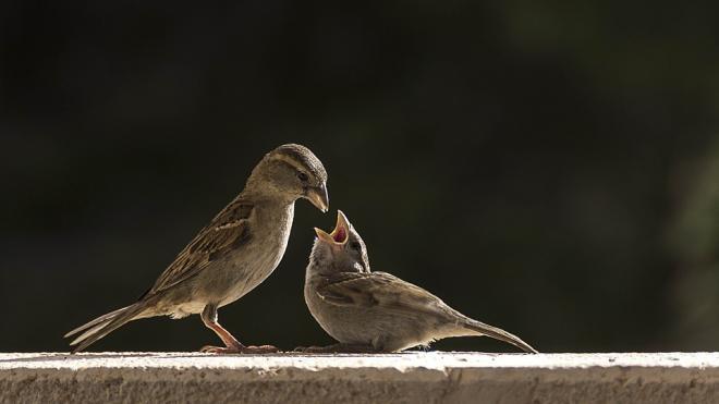 Петербуржцев попросили не подкармливать птиц