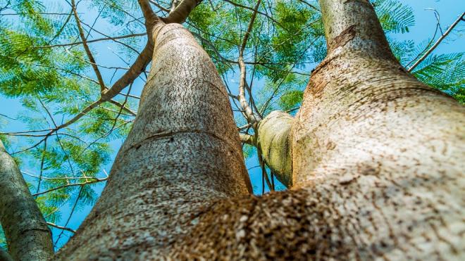 В Сосновой поляне 8-летний ребенок упал с дерева