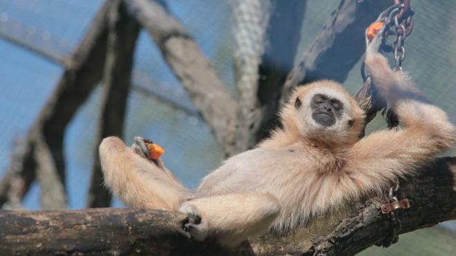 Обитателей Ленинградского зоопарка перевели на легкую фруктовую диету из-за жары