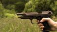 В Тосненском районе полиция обнаружила логово чернокопат...