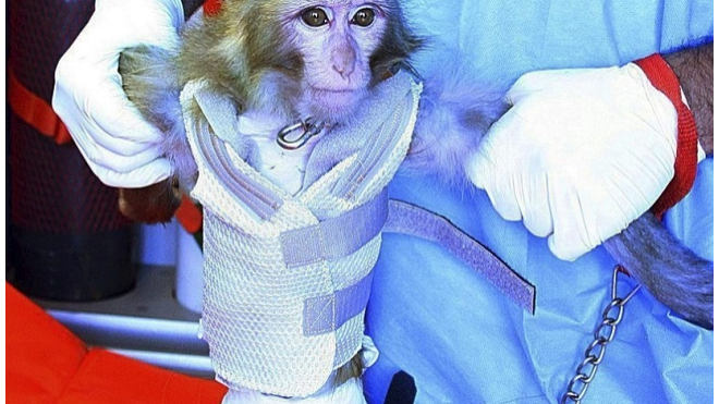 Иранским астронавтом снова станет обезьяна