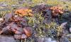 Накануне Нового года петербуржцы заметили грибы в городе