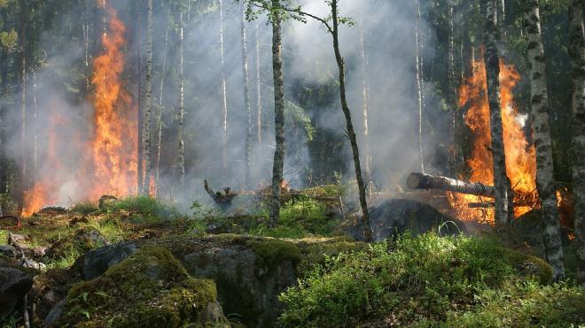 В Выборгском районе запретили посещать леса