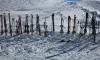 """""""Лыжные стрелы"""" начала развозить петербуржцев к снежным трассам"""