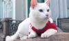 Эрмитажный кот Ахилл: сборная Бельгии выйдет в финал ЧМ-2018