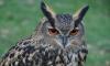 Инспекторы эко-контроля подрались с предпринимателями за право владения совами на Невском проспекте