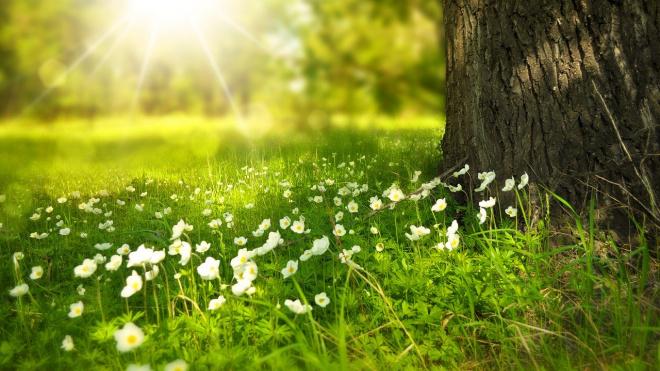 В среду в Ленобласти обещают до +22 градусов тепла