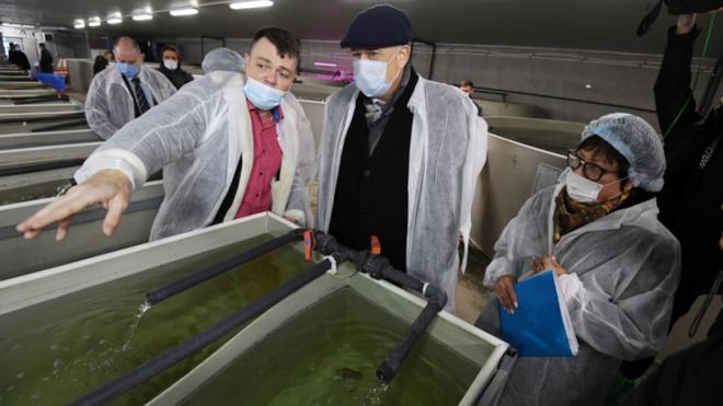 В Ленобласти за год рост производства осетровых рыб составит 28%