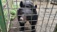В Петербурге для 18 голодающих медведей собирают фрукты ...