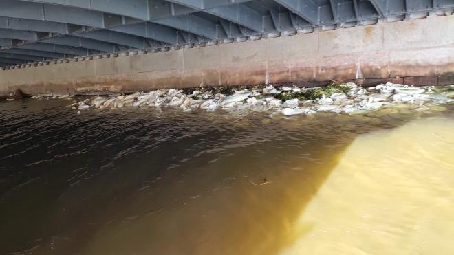 """""""Мостотрест"""" сообщил об истинном назначении мешков под Зеленым мостом"""