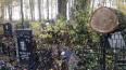 На Серафимовском кладбище спиленные деревья упали ...