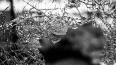 Мужчину избили и выбросили в окно в Новом Девяткино