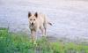 В Ленобласти собираются ввести штрафы за самовыгул домашних животных