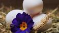 В России начали продавать яйца в упаковке по 9 штук