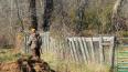 На охотников в Ленобласти составили 38 протоколов