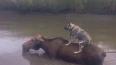 Жители Уссурийска требуют наказать директора зоопарка, ...