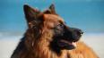 """Водоканал попросил ЗакС защитить служебных собак """"на пен..."""