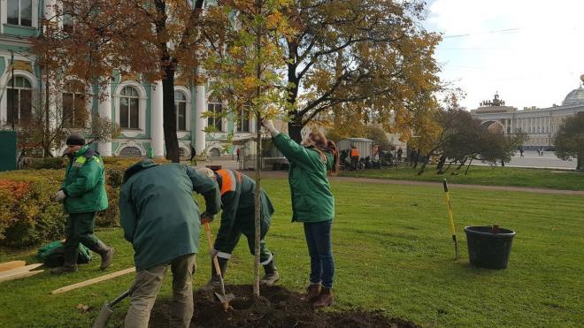 С начала октября садовники высадили в Петербурге около пяти тысяч деревьев
