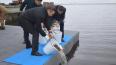 В Петербургев Сестрорецкий разлив выпустили крупныхтол...
