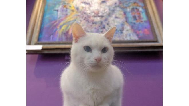 В котокафе открылась выставка необычного художника