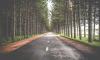 Ленинградская область потратит 136 миллионов рублей на ремонт дороги