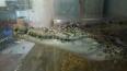 """В центре """"Велес"""" умер крокодил Гена, которого нашли ..."""