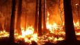 В Выборгском районе Ленобласти 3-й класс пожароопасности