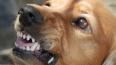 В Бурятии собаки нашли и растерзали новорожденного