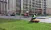 В Мурино привели в порядок газоны на Шувалова