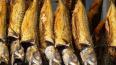 В Петербург не пустили 54 тонны скумбрии из Китая