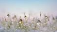 В Петербурге 9 января антициклон оттеснит облака с осадк...