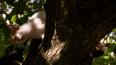В Ленобласти кот прятался от собак на дереве целую ...