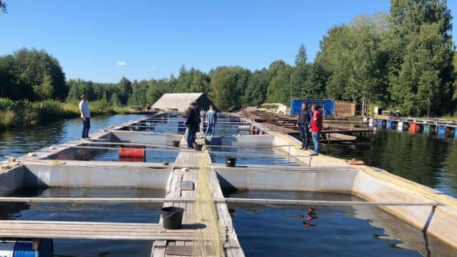 Архангельские рыбоводы учатся разводить рыбу у коллег из Выборгского района
