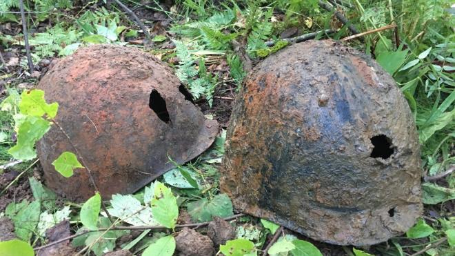 Поисковики нашли 17 останков красногвардейцев на Синявинских высотах