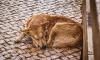 В Киришах в течение двух дней будут отлавливать безнадзорных животных