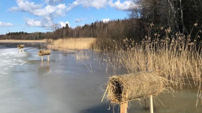 На водоемах в Выборгском районе Ленобласти установили искусственные гнезда для уток